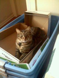 Merlin, sinister cat.